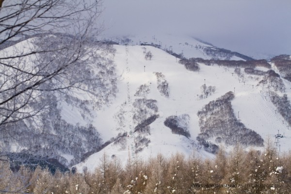 HAPPY NEW YEAR 2012 IN NISEKO - frozen moment